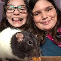 Zoom sur deux jeunes derrière un rat domestique
